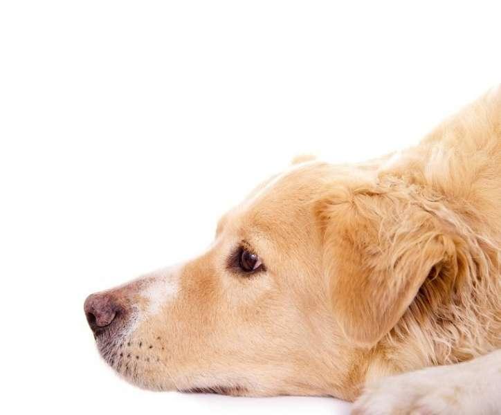 Hundeerziehung online